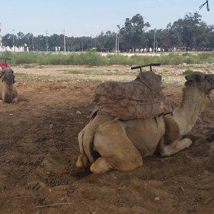 Un bez kamieļu izjādēm arī.